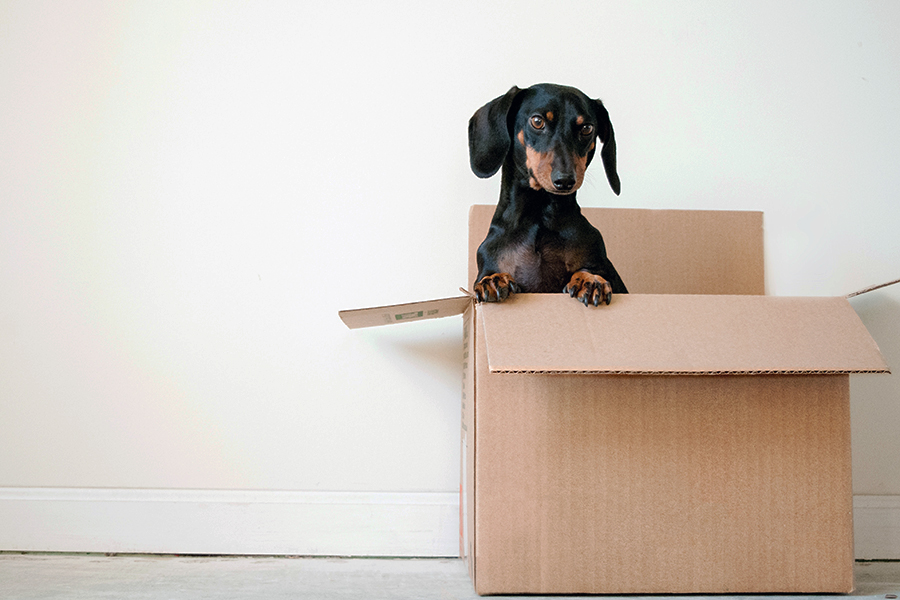 How to Avoid Disruption During An Office Move